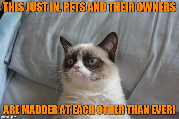 THIS JUST IN. PETS AND THEIR OWNERS ARE MADDER AT EACH OTHER THAN EVER! | made w/ Imgflip meme maker