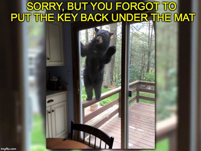 Will do anything for a brownie | SORRY, BUT YOU FORGOT TO PUT THE KEY BACK UNDER THE MAT | image tagged in black bears | made w/ Imgflip meme maker