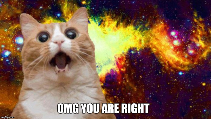 Amazed Cat  | OMG YOU ARE RIGHT | image tagged in amazed cat | made w/ Imgflip meme maker