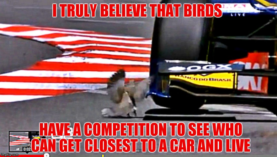 Seriously, and squirrels are indecisive about which way to run! |  I TRULY BELIEVE THAT BIRDS; HAVE A COMPETITION TO SEE WHO CAN GET CLOSEST TO A CAR AND LIVE | image tagged in birds,oh shit,competition,cars,seriously | made w/ Imgflip meme maker