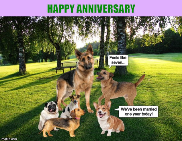 1ot0x9 a wedding anniversary card for dog lovers imgflip