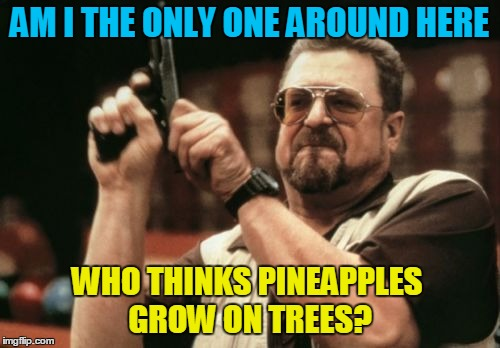 Am I The Only One Around Here Meme | AM I THE ONLY ONE AROUND HERE WHO THINKS PINEAPPLES GROW ON TREES? | image tagged in memes,am i the only one around here | made w/ Imgflip meme maker
