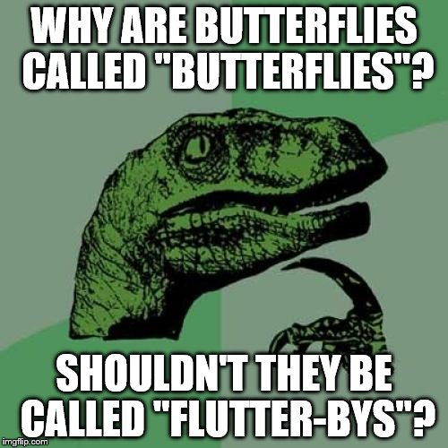 "Philosoraptor Meme | WHY ARE BUTTERFLIES CALLED ""BUTTERFLIES""? SHOULDN'T THEY BE CALLED ""FLUTTER-BYS""? 
