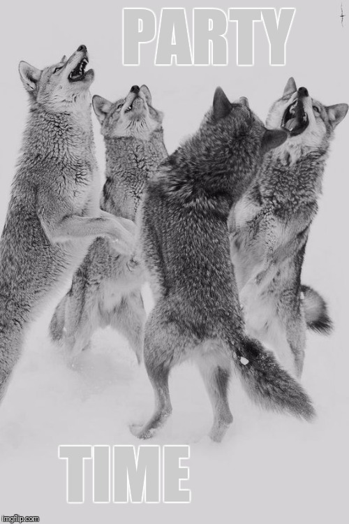 Wolf dance | PARTY TIME | image tagged in wolf dance | made w/ Imgflip meme maker