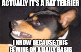 ACTUALLY IT'S A RAT TERRIER I KNOW BECAUSE THIS IS MINE ON A DAILY BASIS | made w/ Imgflip meme maker