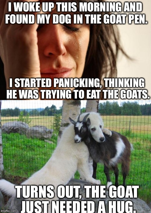 This dog can comfort goats better than I can comfort people! | I WOKE UP THIS MORNING AND FOUND MY DOG IN THE GOAT PEN. TURNS OUT, THE GOAT JUST NEEDED A HUG. I STARTED PANICKING, THINKING HE WAS TRYING  | image tagged in meme,hug,dog and goat,dog hugging goat,adorable | made w/ Imgflip meme maker