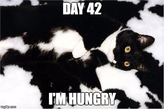 DAY 42 I'M HUNGRY | image tagged in cat,camo,camouflage | made w/ Imgflip meme maker