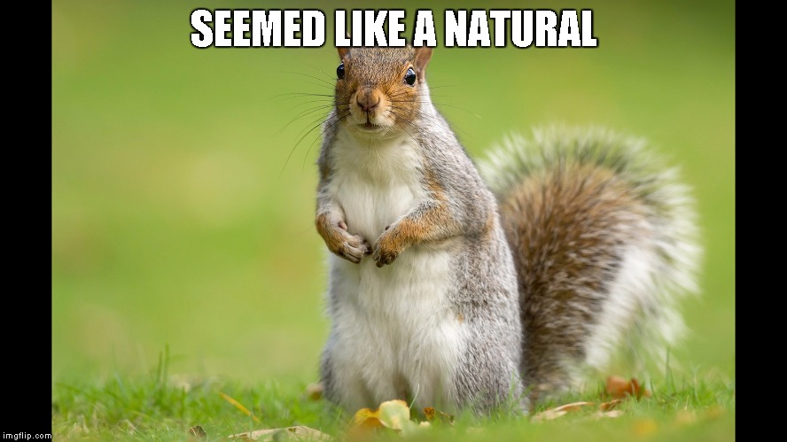 Squirrel | SEEMED LIKE A NATURAL | image tagged in squirrel | made w/ Imgflip meme maker