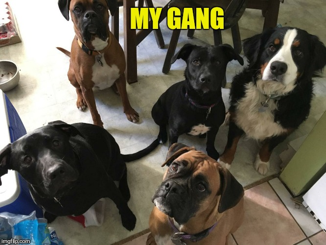 MY GANG | made w/ Imgflip meme maker