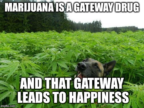 Open the gateway and let Happiness in! | MARIJUANA IS A GATEWAY DRUG AND THAT GATEWAY LEADS TO HAPPINESS | image tagged in marijuanadog | made w/ Imgflip meme maker