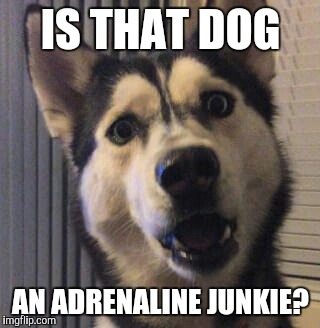 IS THAT DOG AN ADRENALINE JUNKIE? | made w/ Imgflip meme maker
