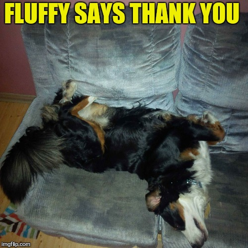 FLUFFY SAYS THANK YOU | made w/ Imgflip meme maker