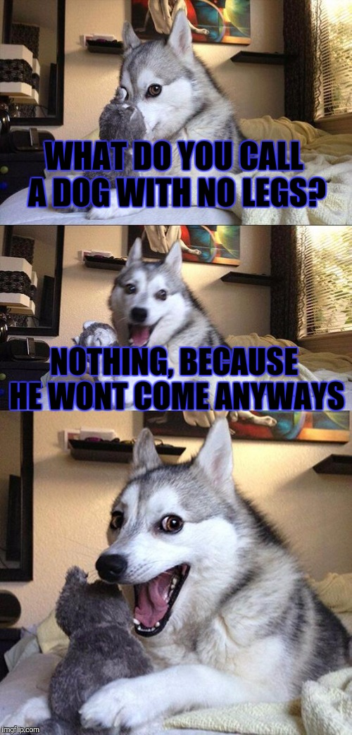 Bad Pun Dog Meme | WHAT DO YOU CALL A DOG WITH NO LEGS? NOTHING, BECAUSE HE WONT COME ANYWAYS | image tagged in memes,bad pun dog,funny | made w/ Imgflip meme maker