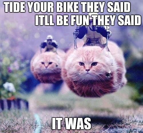 star wars cats | TIDE YOUR BIKE THEY SAID                   ITLL BE FUN THEY SAID IT WAS | image tagged in star wars cats | made w/ Imgflip meme maker