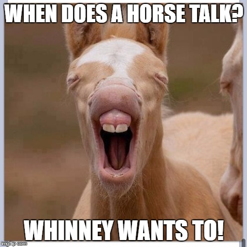 He's just a little horse right now. | WHEN DOES A HORSE TALK? WHINNEY WANTS TO! | image tagged in foal,horse,bad pun | made w/ Imgflip meme maker