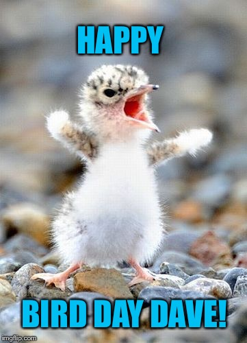 Screaming Bird | HAPPY BIRD DAY DAVE! | image tagged in screaming bird | made w/ Imgflip meme maker