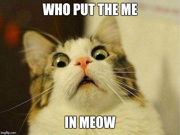 Scared Cat |  WHO PUT THE ME; IN MEOW | image tagged in memes,scared cat | made w/ Imgflip meme maker