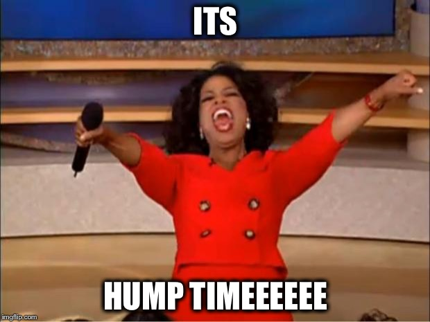 Oprah You Get A | ITS HUMP TIMEEEEEE | image tagged in memes,oprah you get a | made w/ Imgflip meme maker