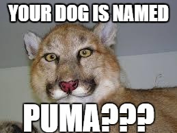 YOUR DOG IS NAMED | made w/ Imgflip meme maker