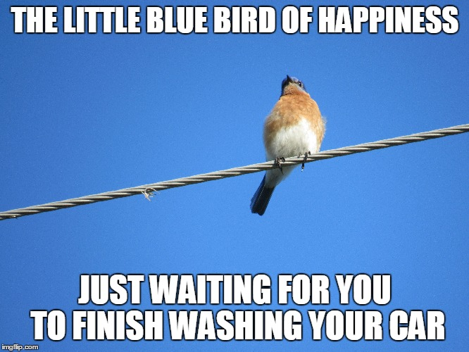 THE LITTLE BLUE BIRD OF HAPPINESS JUST WAITING FOR YOU TO FINISH WASHING YOUR CAR | image tagged in blue bird of happiness | made w/ Imgflip meme maker