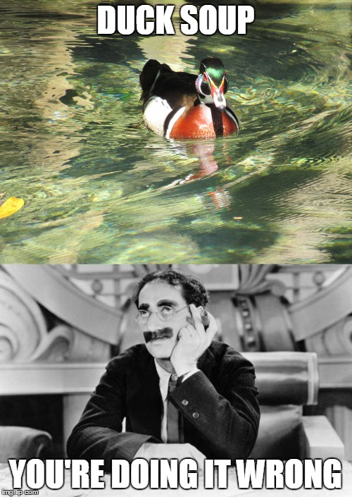 DUCK SOUP YOU'RE DOING IT WRONG | made w/ Imgflip meme maker