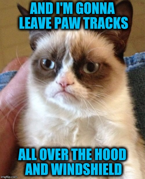 Grumpy Cat Meme | AND I'M GONNA LEAVE PAW TRACKS ALL OVER THE HOOD AND WINDSHIELD | image tagged in memes,grumpy cat | made w/ Imgflip meme maker