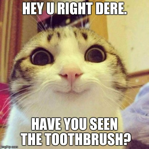 Does anyone have a toothbrush? i think the cat lost his....  | HEY U RIGHT DERE. HAVE YOU SEEN THE TOOTHBRUSH? | image tagged in memes,smiling cat | made w/ Imgflip meme maker