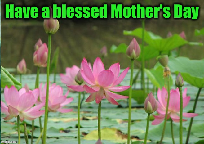 To my fellow mommy flippers.... | Have a blessed Mother's Day | image tagged in lotus flowers high in air | made w/ Imgflip meme maker