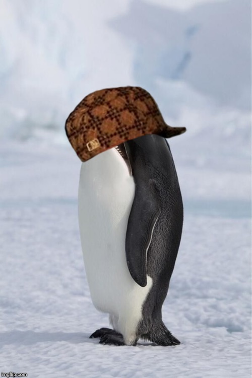 I don't know, I was bored & found this. | image tagged in whale penguin,scumbag | made w/ Imgflip meme maker