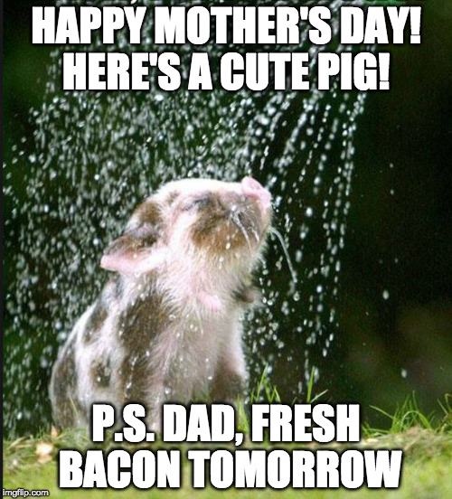 Make everyone happy! | HAPPY MOTHER'S DAY! HERE'S A CUTE PIG! P.S. DAD, FRESH BACON TOMORROW | image tagged in watering bacon seed,mother's day,bacon,mothers day,happy mother's day | made w/ Imgflip meme maker