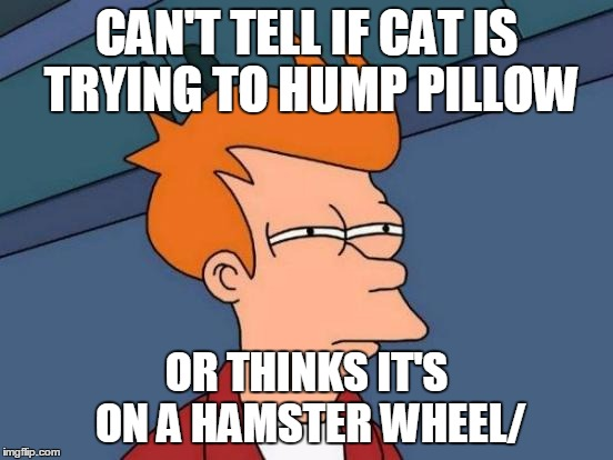 Futurama Fry Meme | CAN'T TELL IF CAT IS TRYING TO HUMP PILLOW OR THINKS IT'S ON A HAMSTER WHEEL/ | image tagged in memes,futurama fry | made w/ Imgflip meme maker