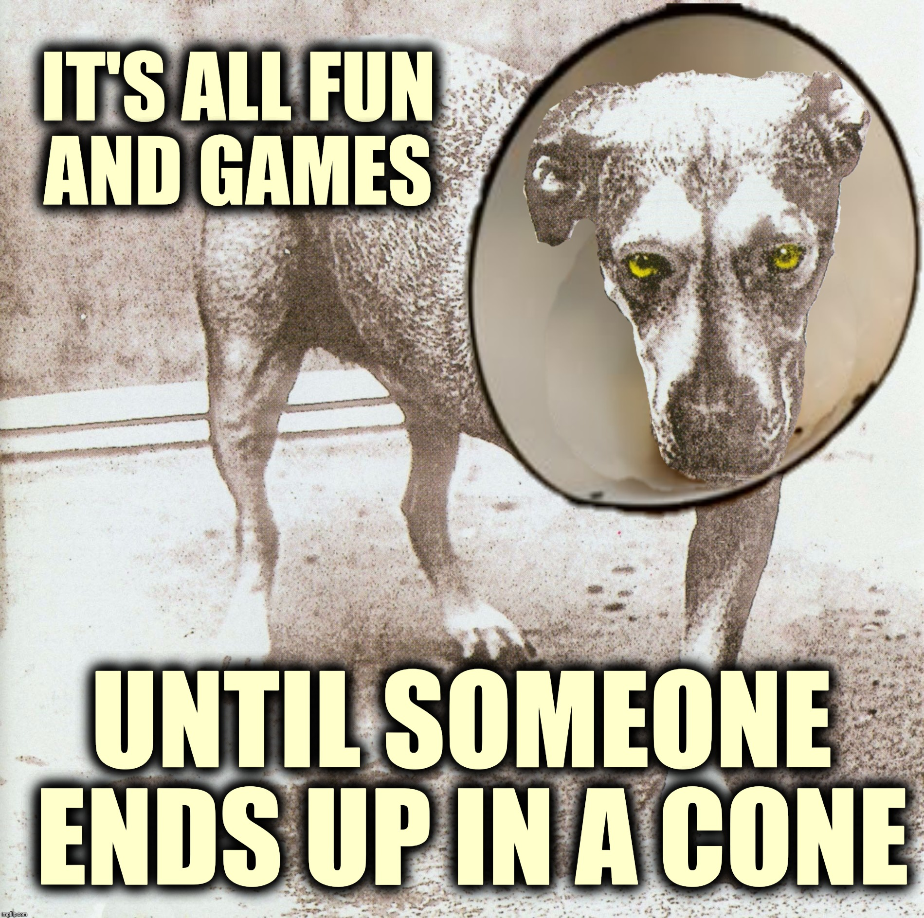 Some like it ruff | IT'S ALL FUN AND GAMES UNTIL SOMEONE ENDS UP IN A CONE | image tagged in memes,lucky the dog,sunshine,alice in chains,jerry cantrell | made w/ Imgflip meme maker