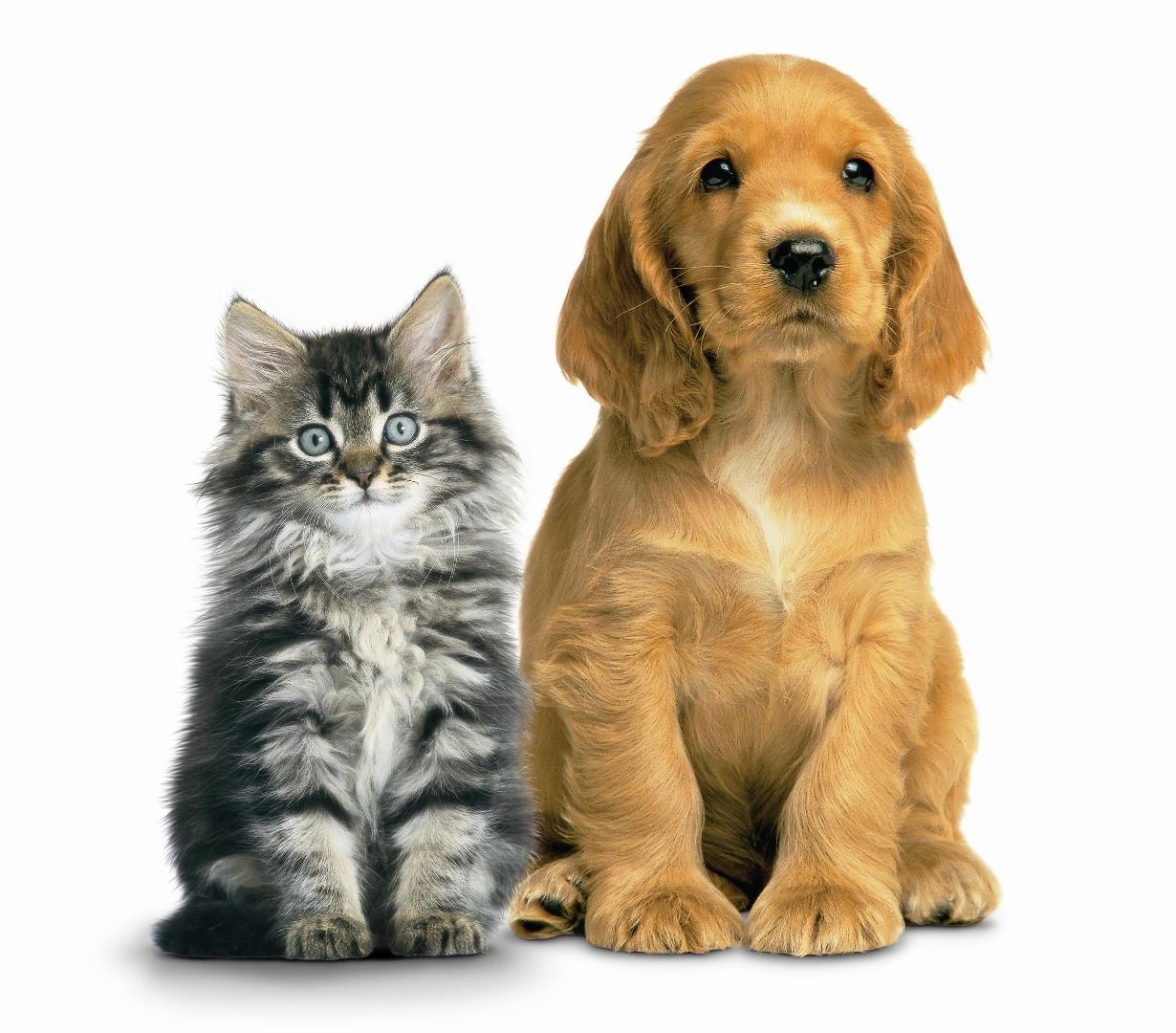 We are a small but mighty NotForProfit 501c3 NoKill dog and cat rescue organization in South Florida comprised solely of volunteers who love animals