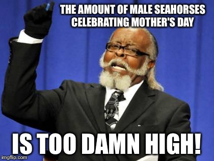 Cause, you know, they give birth too... | THE AMOUNT OF MALE SEAHORSES CELEBRATING MOTHER'S DAY IS TOO DAMN HIGH! | image tagged in memes,too damn high | made w/ Imgflip meme maker