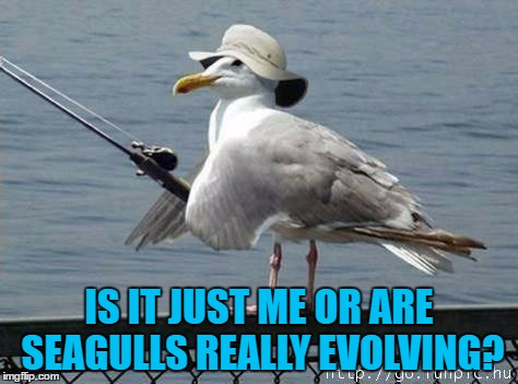 They'll have their own fishing boats soon :) | IS IT JUST ME OR ARE SEAGULLS REALLY EVOLVING? | image tagged in bird-fishy,memes,seagulls,animals,birds | made w/ Imgflip meme maker