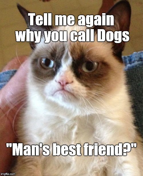 "Grumpy Cat Meme | Tell me again why you call Dogs ""Man's best friend?"" 