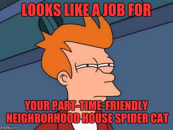 Futurama Fry Meme | LOOKS LIKE A JOB FOR YOUR PART-TIME-FRIENDLY NEIGHBORHOOD HOUSE SPIDER CAT | image tagged in memes,futurama fry | made w/ Imgflip meme maker