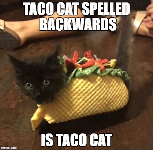 TACO CAT SPELLED BACKWARDS; IS TACO CAT | image tagged in taco cat | made w/ Imgflip meme maker