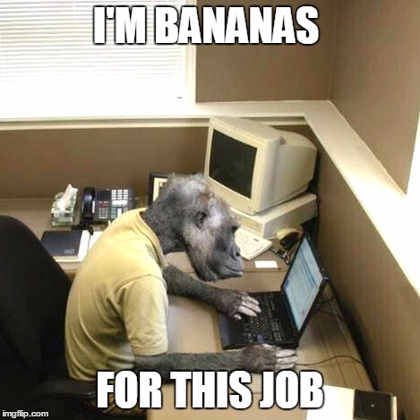 Monkey Business | I'M BANANAS FOR THIS JOB | image tagged in memes,monkey business | made w/ Imgflip meme maker