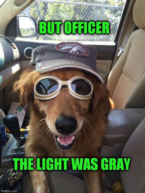 but officer | BUT OFFICER THE LIGHT WAS GRAY | image tagged in funny dogs,dogs,pulled over,police,driving,officer | made w/ Imgflip meme maker