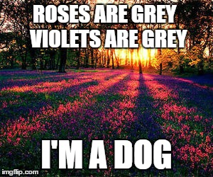 roses are red | ROSES ARE GREY  VIOLETS ARE GREY I'M A DOG | image tagged in roses are red,dog,memes,funny,funny memes,funny animals | made w/ Imgflip meme maker