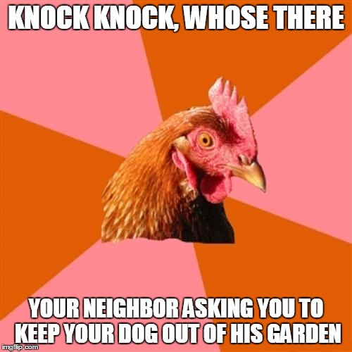 Anti Joke Chicken Meme |  KNOCK KNOCK, WHOSE THERE; YOUR NEIGHBOR ASKING YOU TO KEEP YOUR DOG OUT OF HIS GARDEN | image tagged in memes,anti joke chicken | made w/ Imgflip meme maker