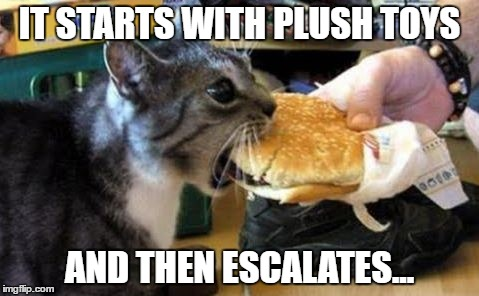 cat noms | IT STARTS WITH PLUSH TOYS AND THEN ESCALATES... | image tagged in cat noms | made w/ Imgflip meme maker