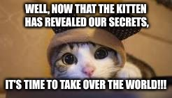 Awkward Moment Cat | WELL, NOW THAT THE KITTEN HAS REVEALED OUR SECRETS, IT'S TIME TO TAKE OVER THE WORLD!!! | image tagged in awkward moment cat | made w/ Imgflip meme maker