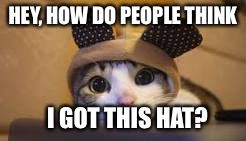 Awkward Moment Cat | HEY, HOW DO PEOPLE THINK I GOT THIS HAT? | image tagged in awkward moment cat | made w/ Imgflip meme maker