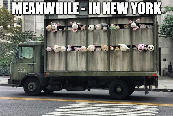 Cut rate meats made in China | MEANWHILE - IN NEW YORK | image tagged in meanwhile in,new york,memes,stuffed animal | made w/ Imgflip meme maker