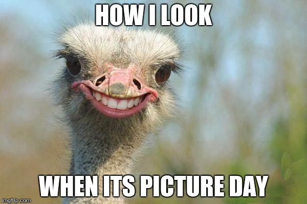 Funny Meme Yay : Funny ostrich meme generator imgflip