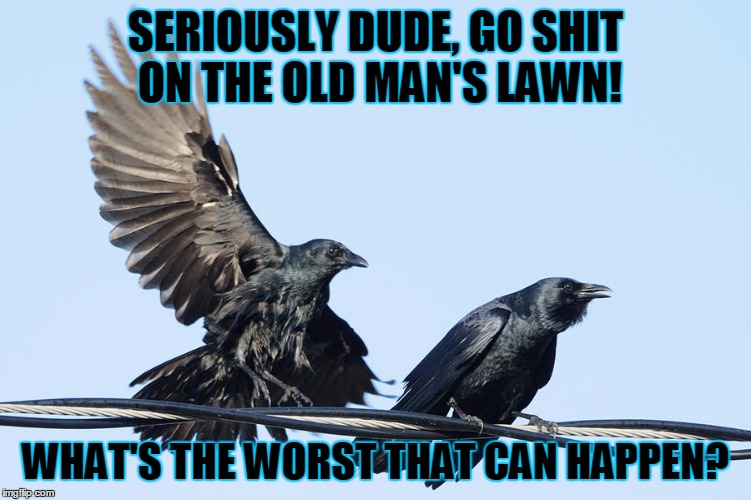SERIOUSLY DUDE, GO SHIT ON THE OLD MAN'S LAWN! WHAT'S THE WORST THAT CAN HAPPEN? | made w/ Imgflip meme maker