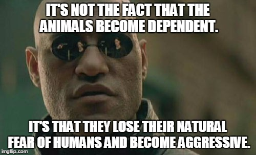 Matrix Morpheus Meme | IT'S NOT THE FACT THAT THE ANIMALS BECOME DEPENDENT. IT'S THAT THEY LOSE THEIR NATURAL FEAR OF HUMANS AND BECOME AGGRESSIVE. | image tagged in memes,matrix morpheus | made w/ Imgflip meme maker