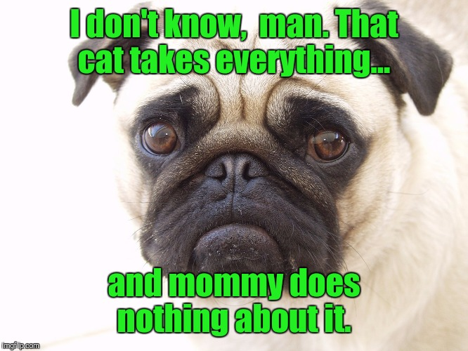 I don't know,  man. That cat takes everything... and mommy does nothing about it. | made w/ Imgflip meme maker